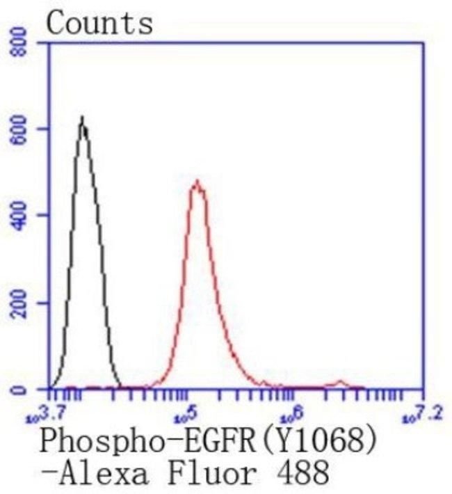 EGFR Rabbit anti-Human, Clone: SD2055, Novus Biologicals 100µL